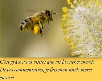 fin article  ruche